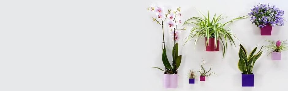Kvetinové obrazy