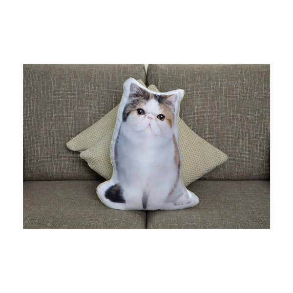 Vankúšik Adorable Cushions Exotická krátkosrstá mačka