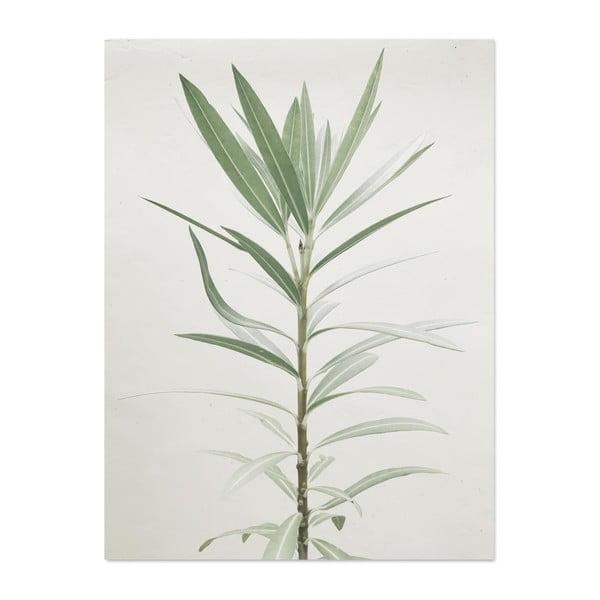 plag t hf living botanic aphrodite 30 40 cm bonami. Black Bedroom Furniture Sets. Home Design Ideas