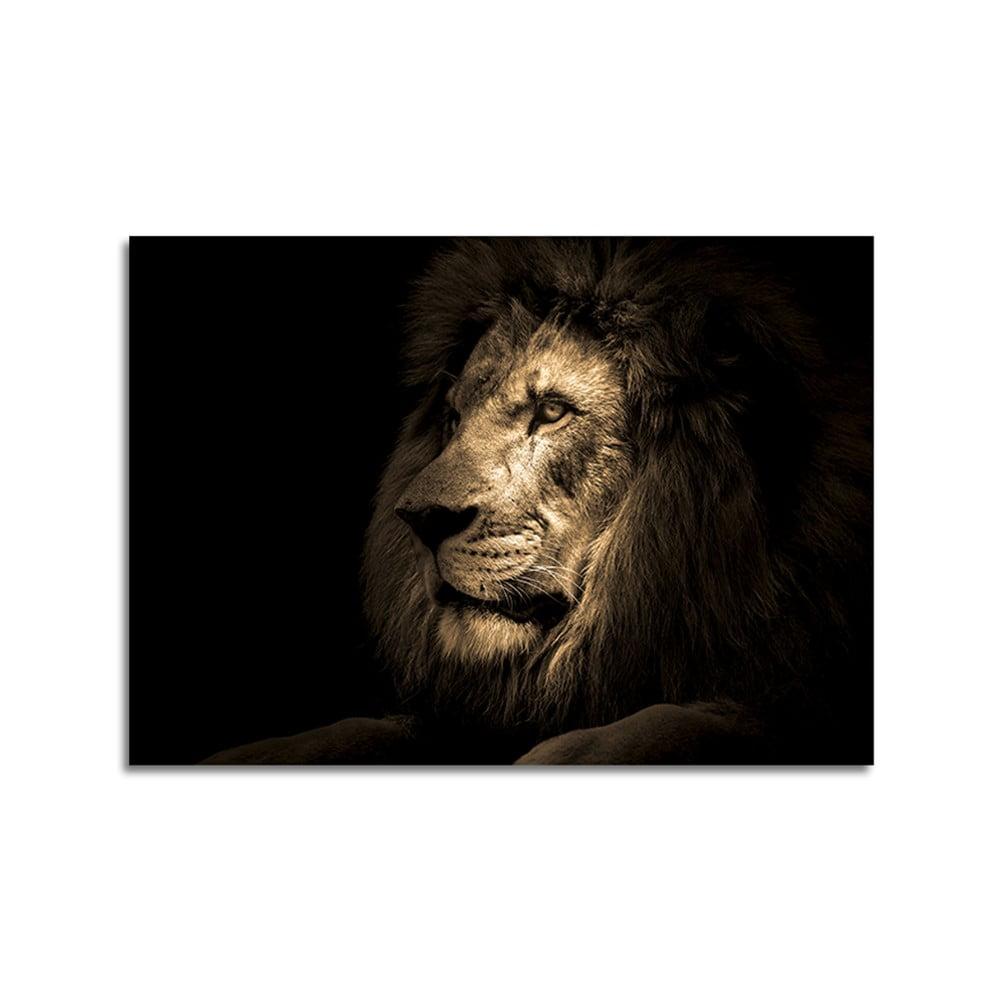 Obraz Styler Glas Animals Lion, 70 × 100 cm