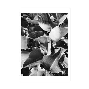 Plagát HF Living Botanic Aphrodite, 21×30 cm