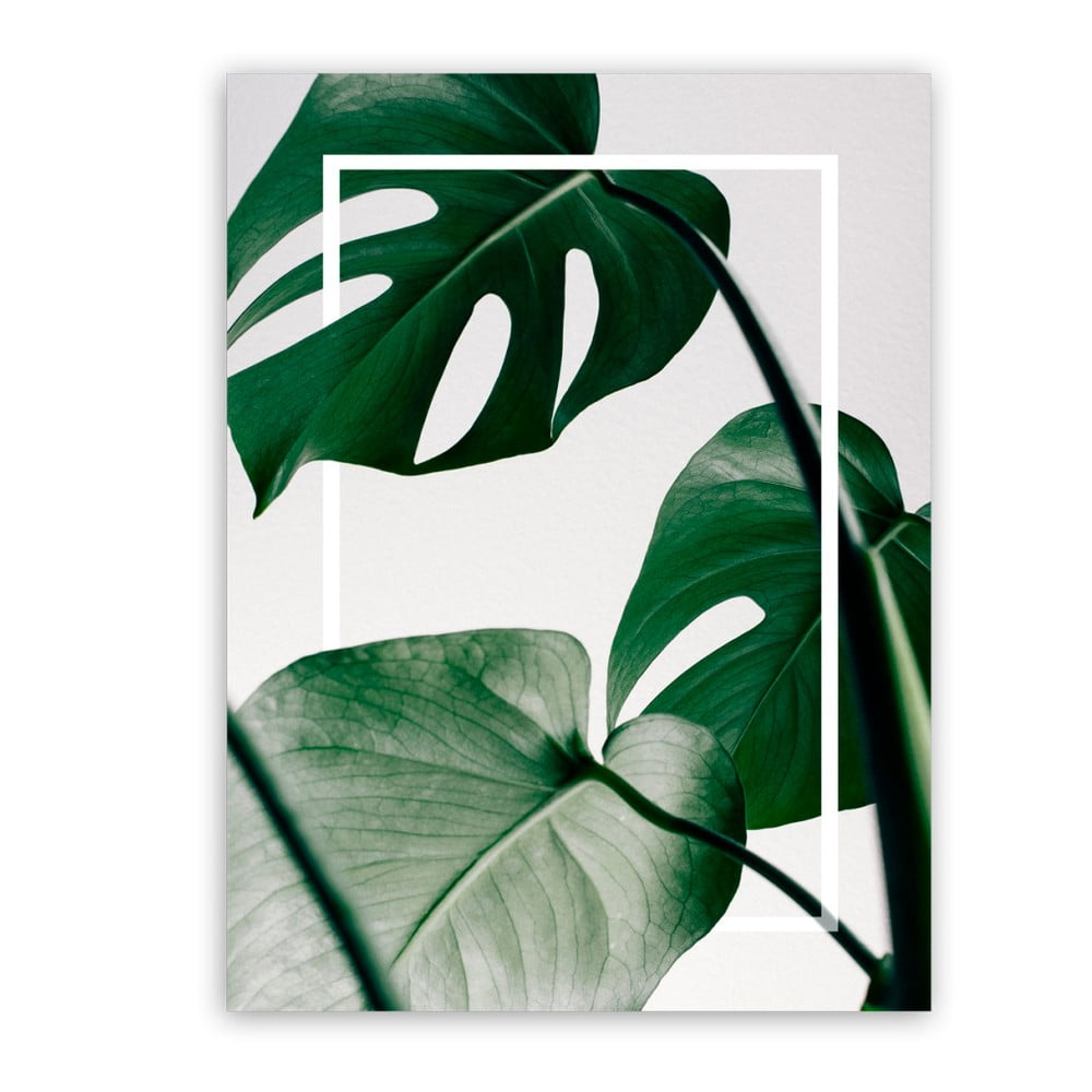 Obraz Styler Canvas Greenery Monstera, 60 × 80 cm