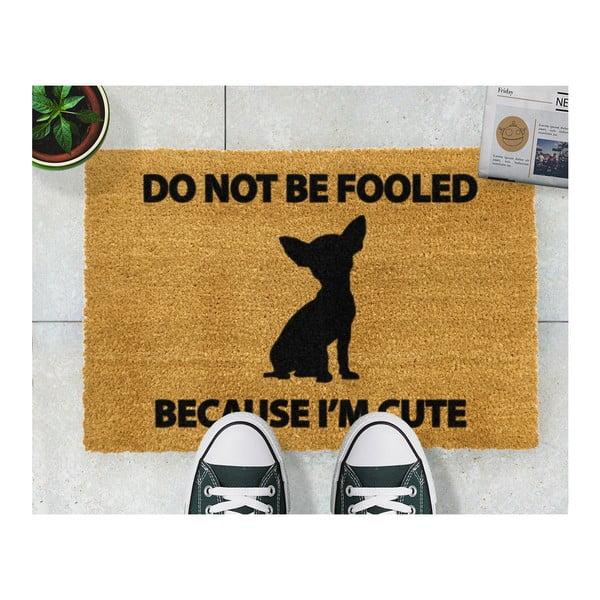 Rohožka Artsy Doormats Chihuahua, 40x60cm