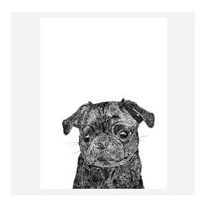 Plagát Olive the Black Pug, 30x40 cm