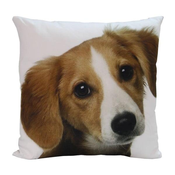Vankúš Happy Dog, 45x45 cm