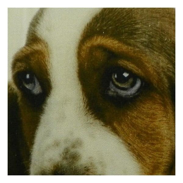 Vankúš Basset Pup 50x50 cm