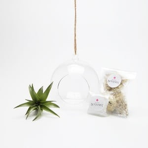 Terárium s rastlinami Globe Mini DIY