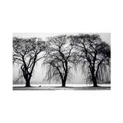 Obraz Black&White Trees, 41 x 70 cm