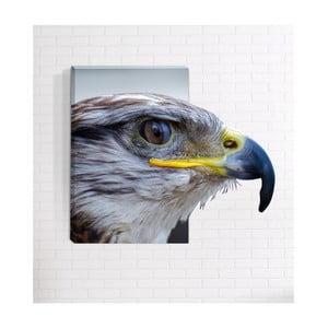 Nástenný 3D obraz Mosticx Orol, 40 x 60 cm