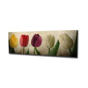 Nástenný obraz na plátne Tulip, 80 × 30 cm