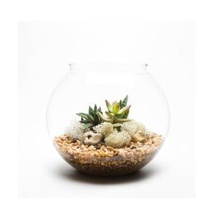 Guľaté terárium s rastlinami Natural