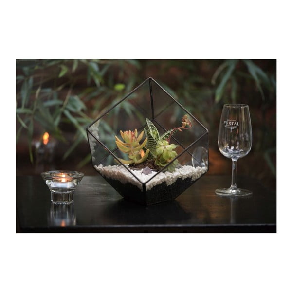 Terárium s rastlinami Tillandsia