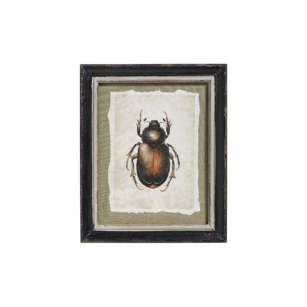 Obraz Beetle, 39x24 cm