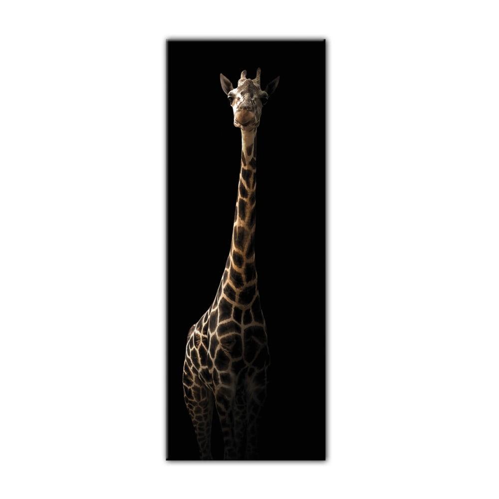 Obraz Styler Glas Animals Gira, 50 × 125 cm