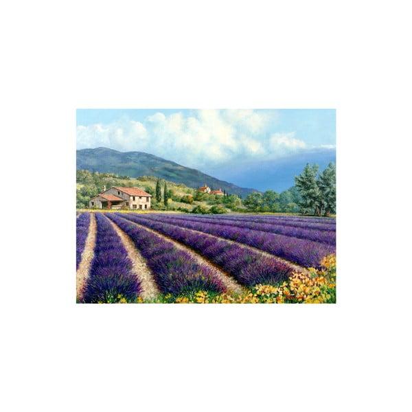 Obraz Field of Lavender, 60x80 cm