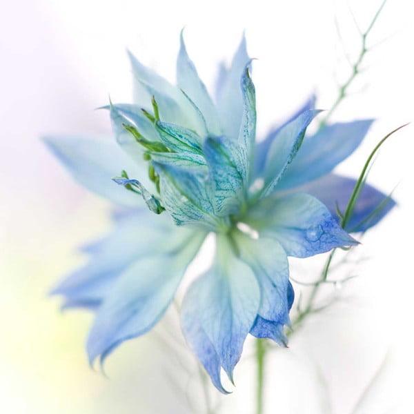 Obraz Modrá, 60x60 cm