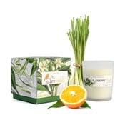 Vonná sviečka s vôňou citrónovej trávy HF Living