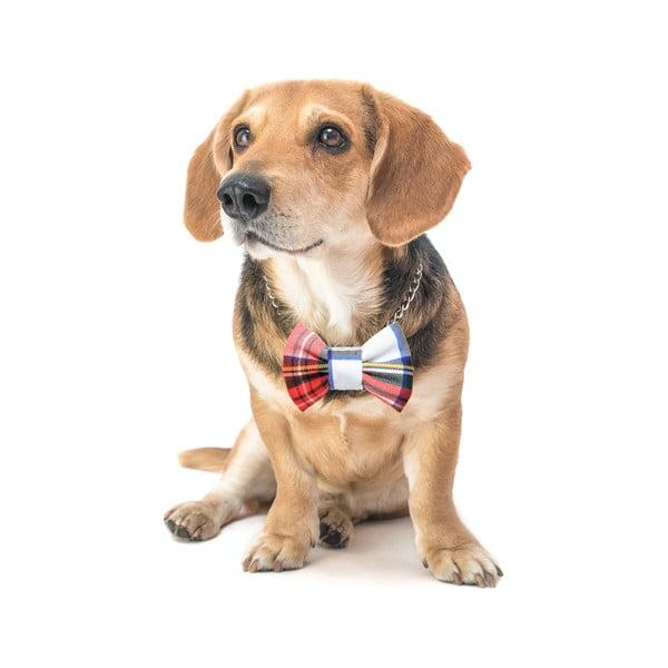 Farebný károvaný charitatívny psí motýlik Funky Dog Bow Ties, veľ. S