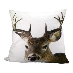 Vankúš Deer 50x50 cm