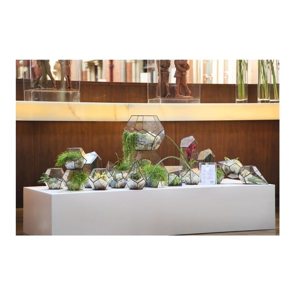 Terárium s rastlinami Cloche