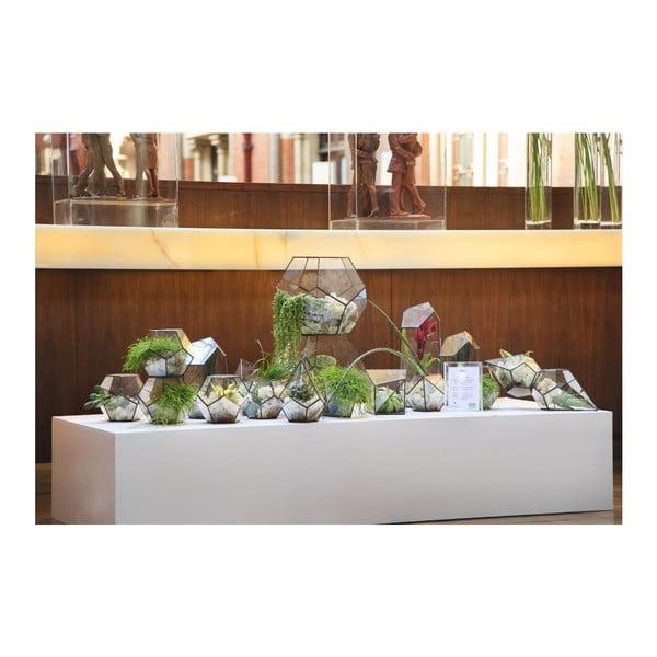 Terárium s rastlinami Epiphyte