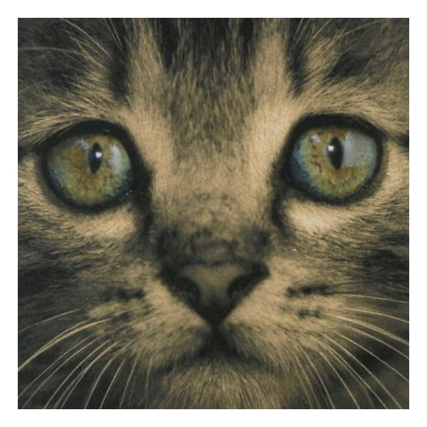 Kuchynská predložka Kitten Green Eyes