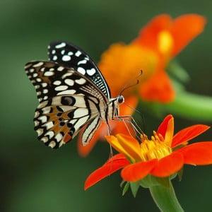 Obraz Obedová motýlia pauza, 60x60 cm