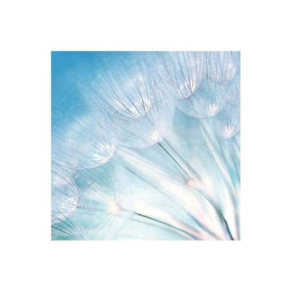 Obraz na skle Páperie, 50x50 cm