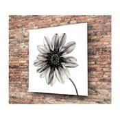 Čierno-biely sklenený obraz Insigne Flower, 30 × 30 cm