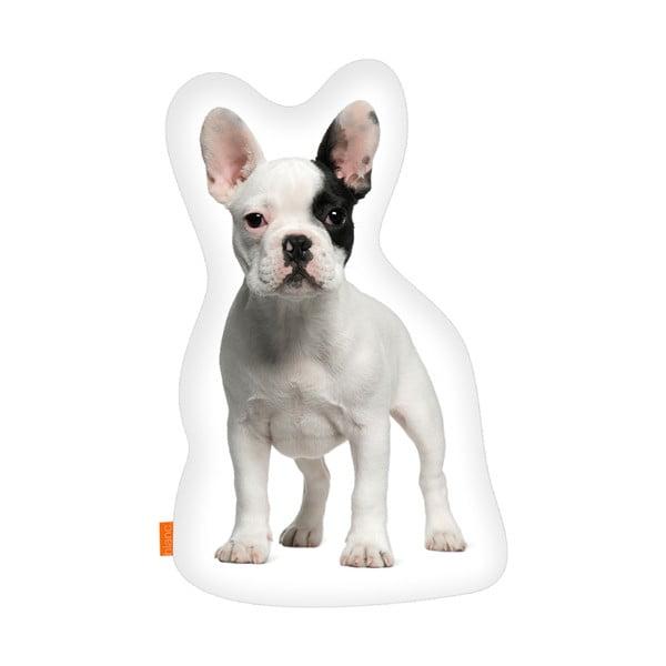 Vankúš French Bulldog, 40x30 cm