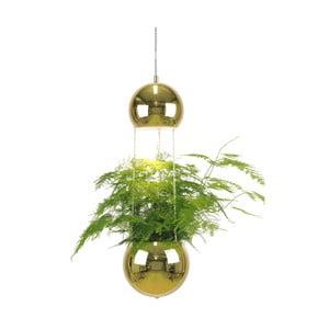 Závesné svietidlo vo farbe mosadze Globen Lighting Mini Planter