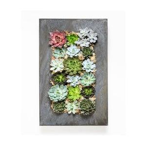 Nástenný kvetináč so sukulentmi Wall, 72x45 cm