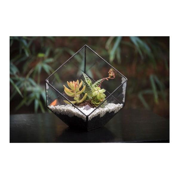 Terárium s rastlinami Super Aztec Cube