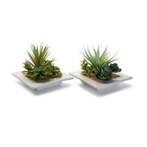 Sada 2 keramických kvetináčov s rastlinkami Low Pots