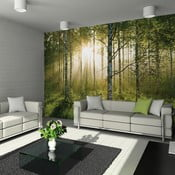 Veľkoformátová tapeta Forest, 315x232cm