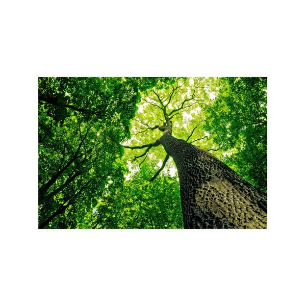 Obraz V zeleni, 45x70 cm