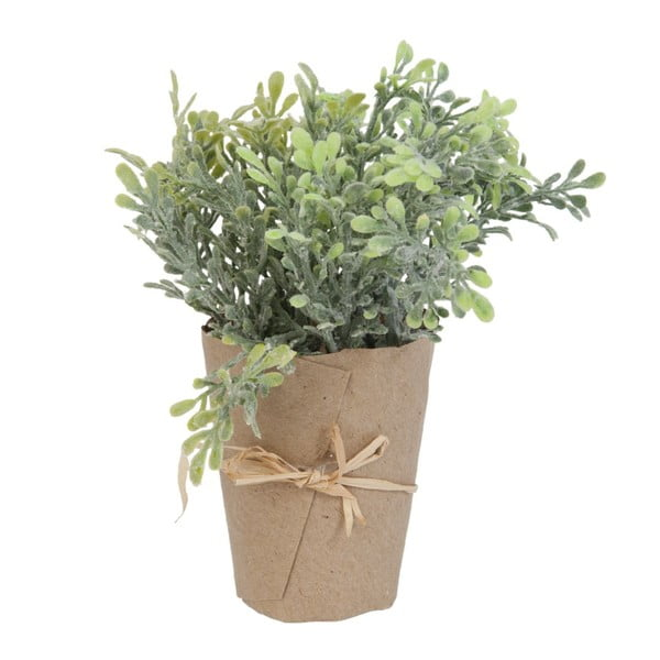 Dekoratívny kvet Plant