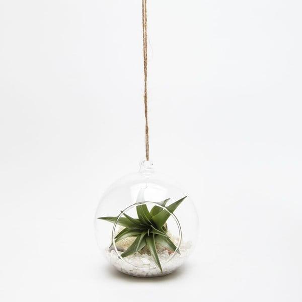 Terárium s rastlinami Globe Mini