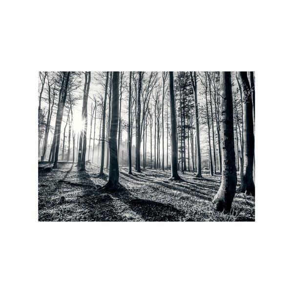 Veľkoformátová tapeta Hlboký les, 360x253cm