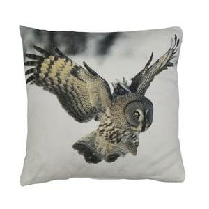Vankúš Wild Owl, 45x45 cm