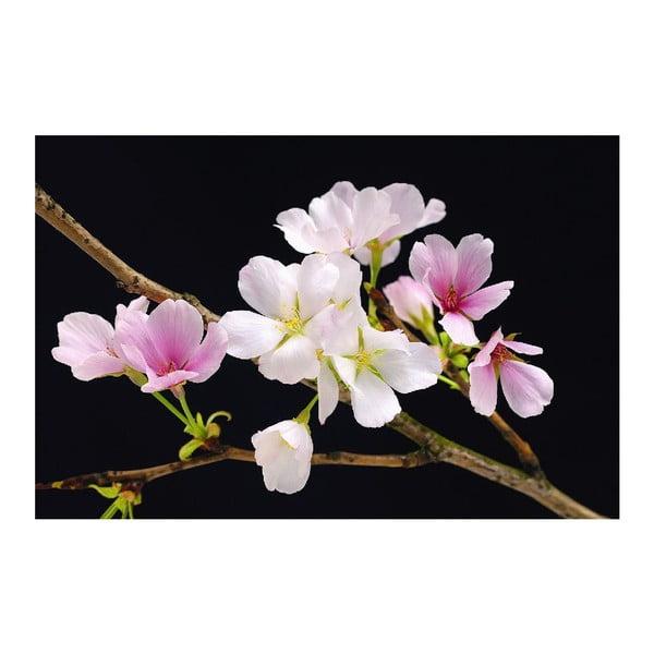 Maxi plagát Cherry Blossoms, 175x115 cm