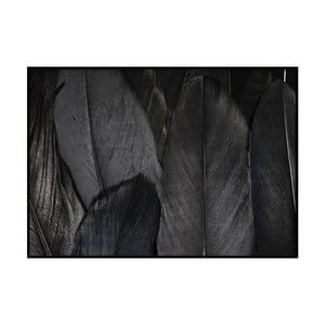 Plagát DecoKing Feathers Black, 100 x 70 cm