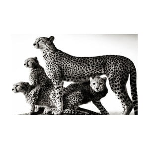 Obraz Black&White Wildness, 45 x 70 cm