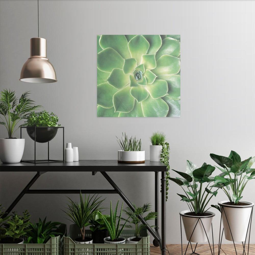 Sklenený obraz OrangeWallz Botanic, 40 x 50 cm