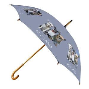 Dáždnik Chihuahua