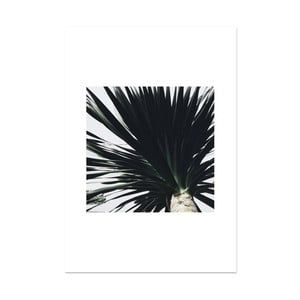 Plagát HF Living Botanic Devotion, 21×30 cm