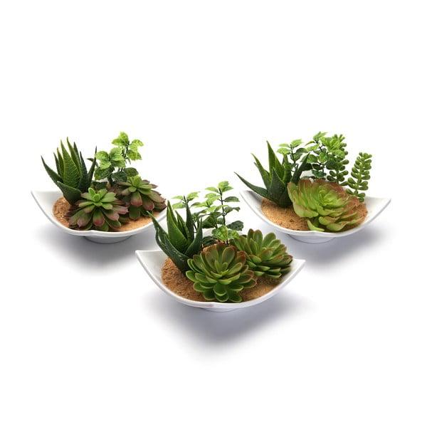 Sada 3 keramických kvetináčov s rastlinkami White Pots