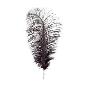 Dekoratívne pštrosie perie  Aubergine, výška 35 cm