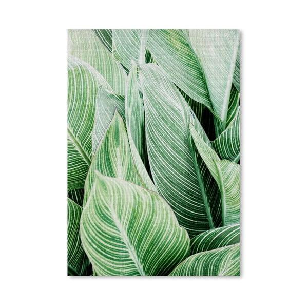 Plagát Tropical Leaves