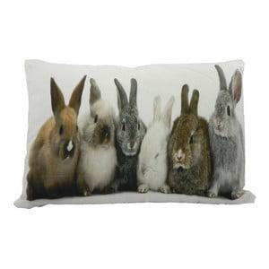 Vankúš Rabbits 50x35 cm